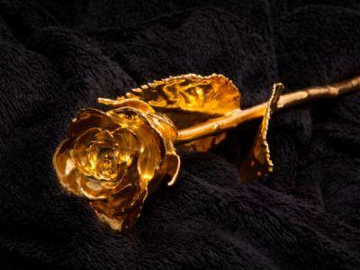 Kullattu ruusu