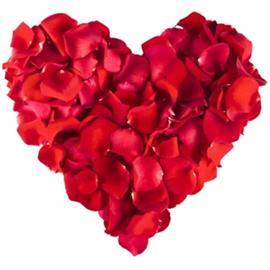 Ruusun terälehdet, 500 kpl