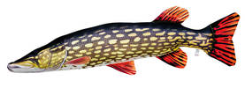 Hauki, kalatyyny / pehmolelu 110 cm