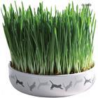 Keraaminen astia kissanruoholle - ä˜ 15 cm + 50 g siemeniä