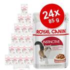 Royal Canin -säästöpakkaus 24 x 85 g - British Shorthair