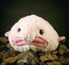 Blobfish (möykkykala), pehmolelu