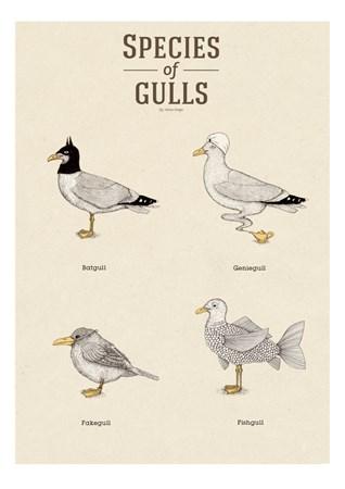 A Grape Design Species of gulls vol.2 A3