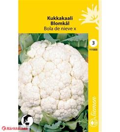 Kukkakaali Bola De Nieve X