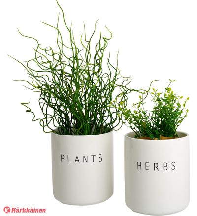 Koti Plants & herbs iso yrttipurkki