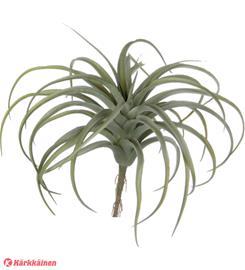 Mica Tillandsia 28x28 cm koristekasvi