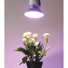 Kasvilamppu LED E27 PAR38