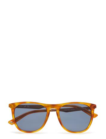 Web Eyewear We0160 Ruskea