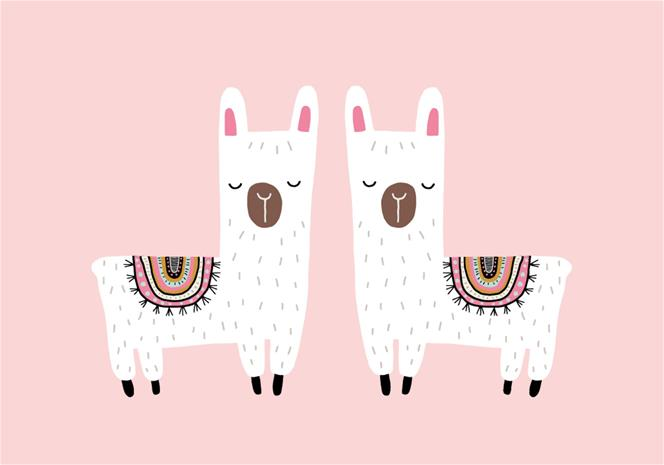 POPP Juliste 21x30, Twin Alpacas