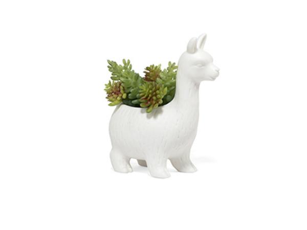 Lloyd the Llama, ruukku