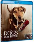 A Dog's Way Home (2019, Blu-Ray), elokuva