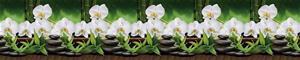 Dekorativt stänkskydd till köket WHITE ORCHID