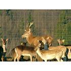 Eläinverkko hitsattu 2 x 50m