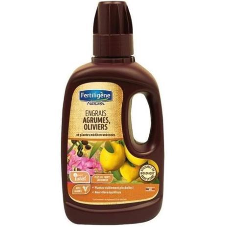 Lannoite sitrushedelmien oliivipuita kasveja keskimäärin 400ml / nc