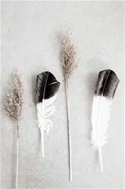 Love Warriors Juliste Dry reeds and feathers