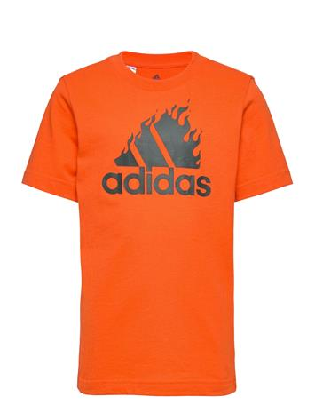 adidas Performance Jb Bos Graph T-shirts Short-sleeved Oranssi Adidas Performance ORANGE