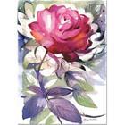 Minna Immonen Fuksianpunainen ruusu 50x70cm juliste