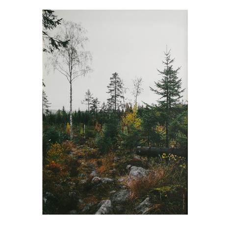 Fine Little Day Norrland juliste 50x70 cm Harmaa-valkoinen