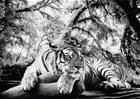 Sisustustaulu Reinders Tiger is watching you 100 x 140 cm