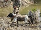 CaniHunt Neopro Vest v2 liivi koiralle Kannattelee koiraa vedessä