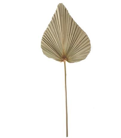 Amanda B 50cm palmunlehti