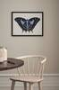 Taulu Vs Beautiful Butterfly ll+lll