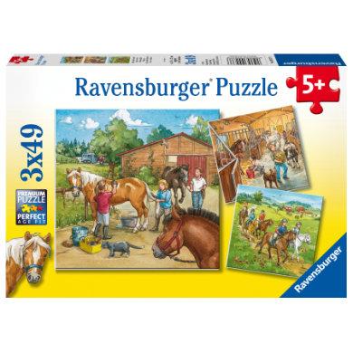 Ravensburger Puzzle 3x49 - Hevostilani