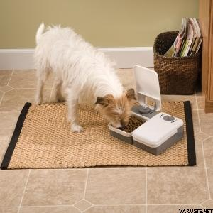 PetSafe 2 Meal Pet Feeder, ruokinta-automaatti